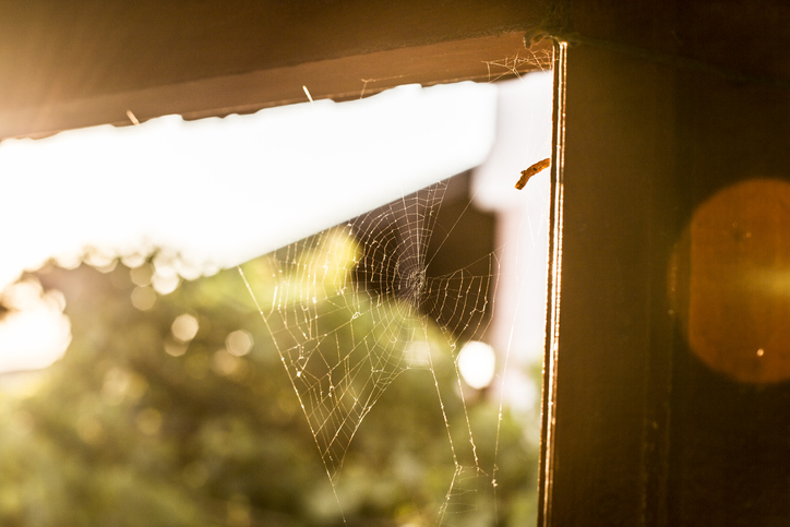 Halloween Decor is in, Authentic Cobwebs are Not. Let Our Maids in Southern Highlands Tidy Up Your Home